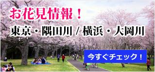 お花見情!報東京・隅田川 / 横浜・大岡川