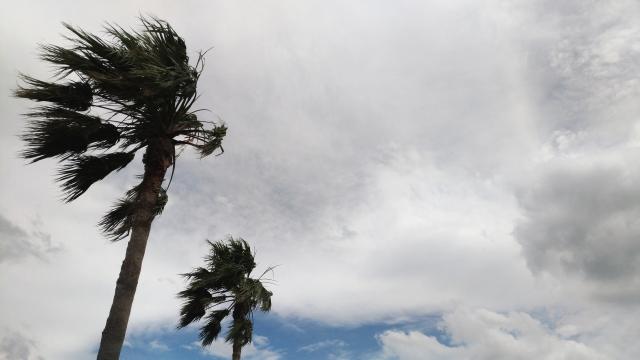 東京・横浜での台風ヤシの木