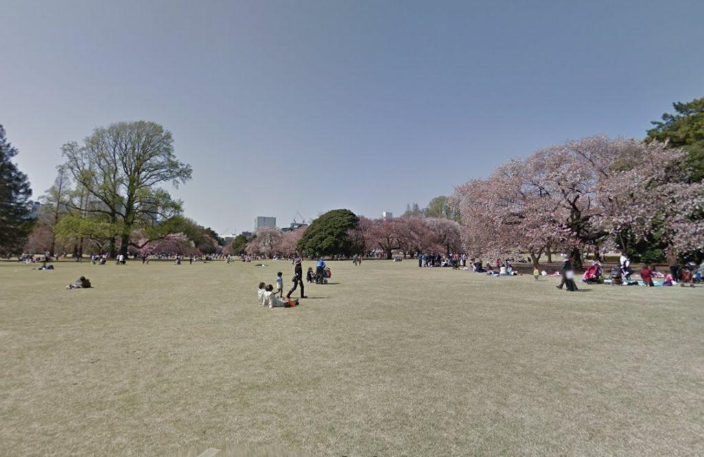 新宿御苑の広場でのんびりお花見
