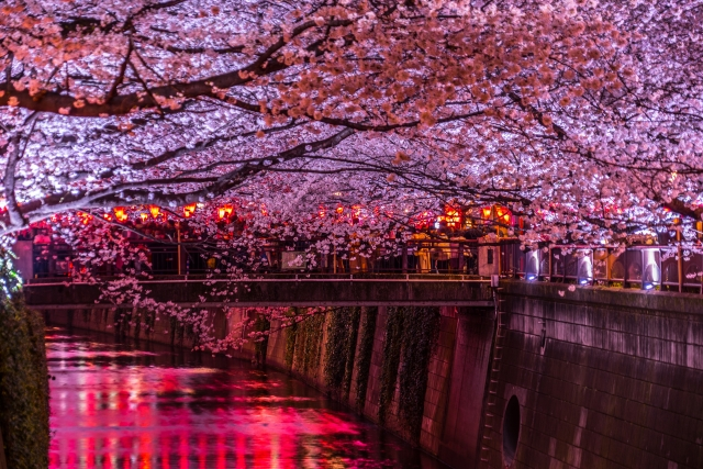 目黒川の桜トンネル