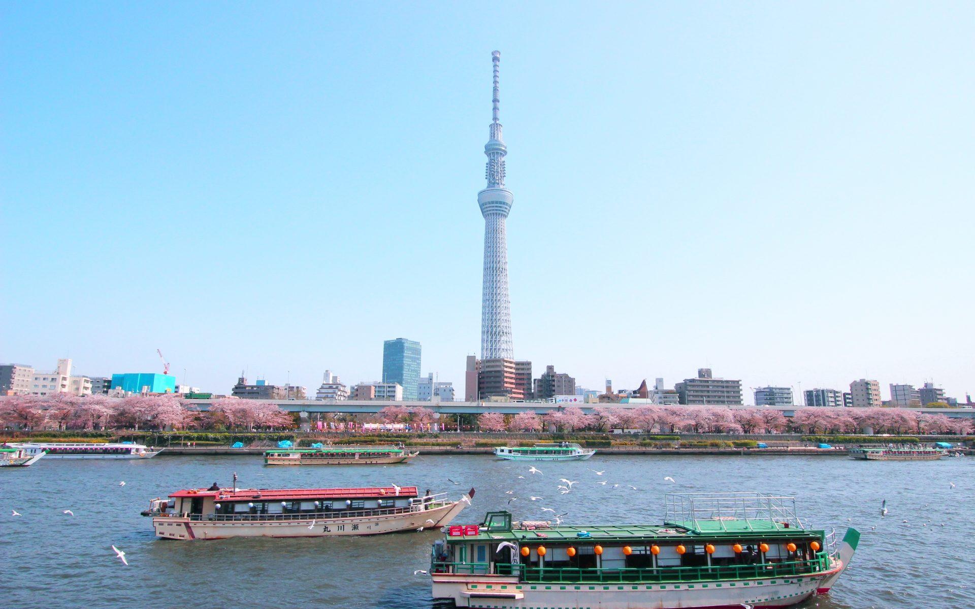 隅田川のお花見